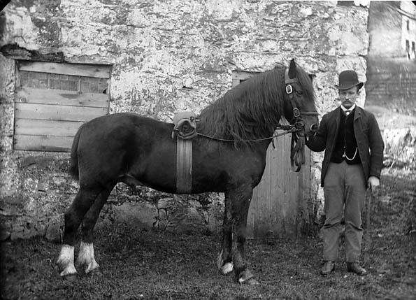 [A horse (Owen)]