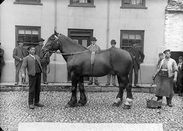 [A horse (Hughes, Bala)]