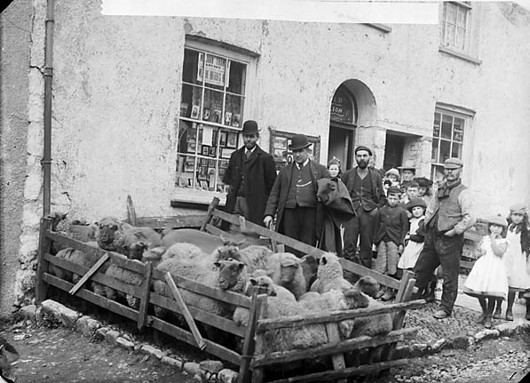 [Sheep mart, Narberth]