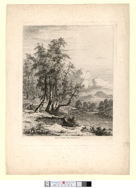 Birch Woods near Llangollen