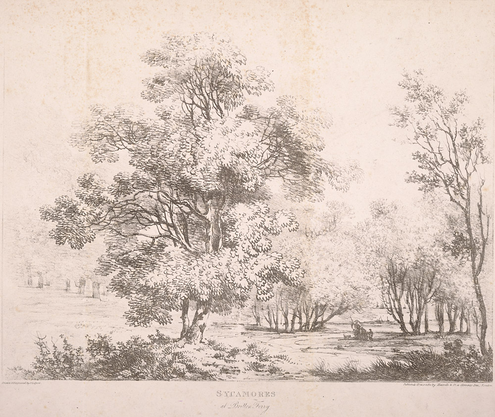 Sycamores at Britton Ferry