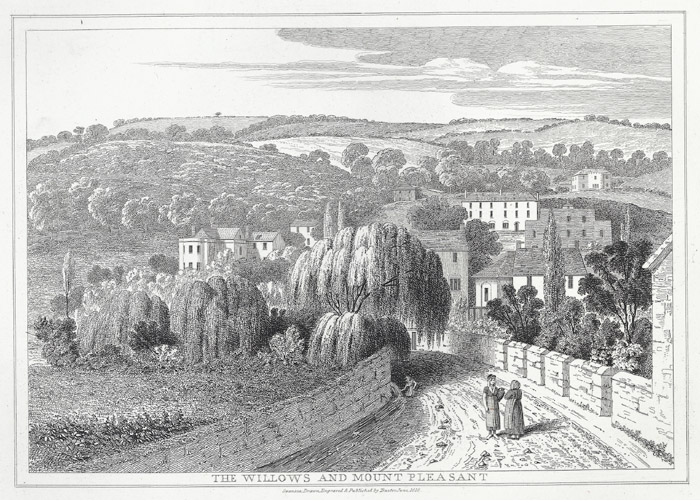 The willows and mount pleasant