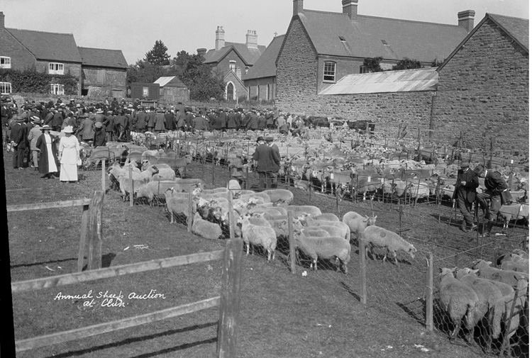 Annual sheep auction at Clun