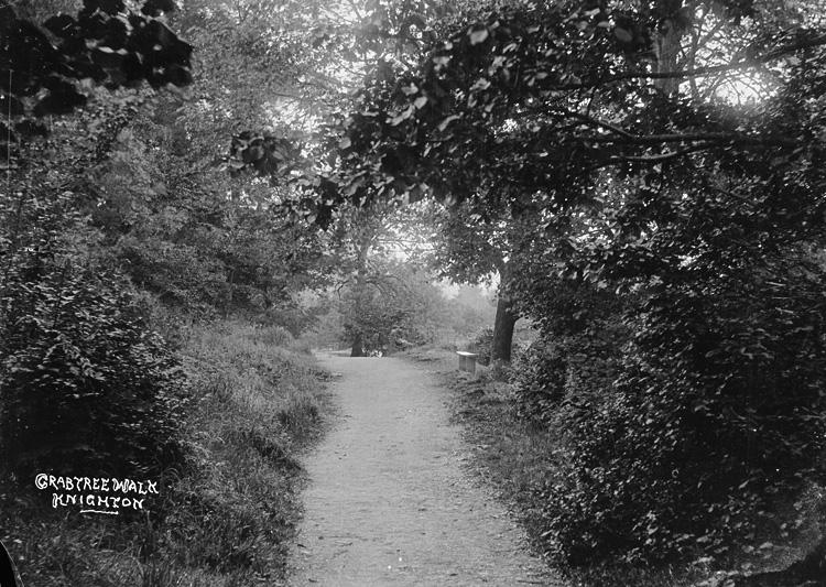 Crabtree walk Knighton