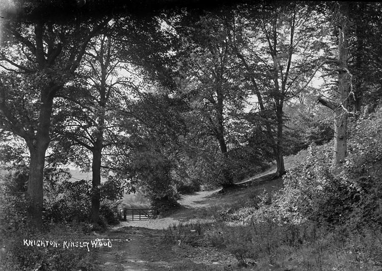Knighton. Kinsley Wood