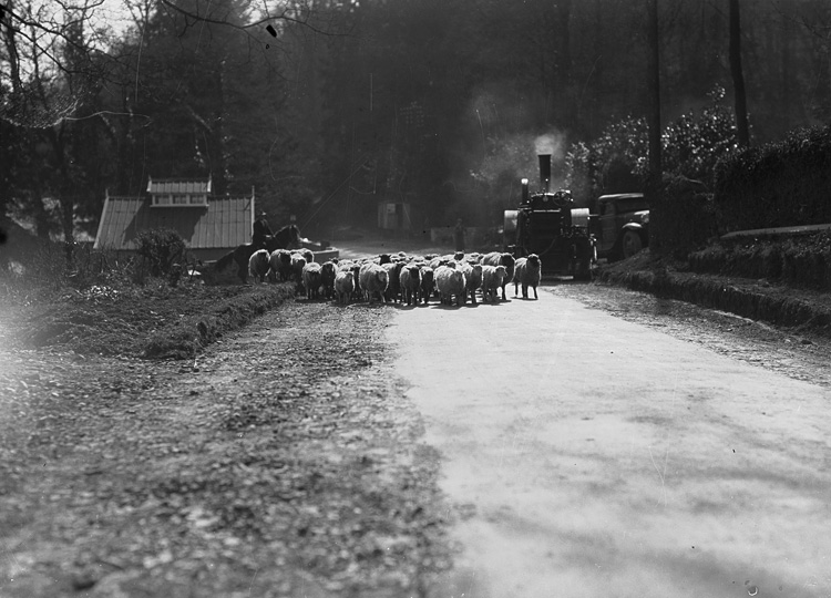 [Sheep and steamroller on road at Llangoed, Erwood]