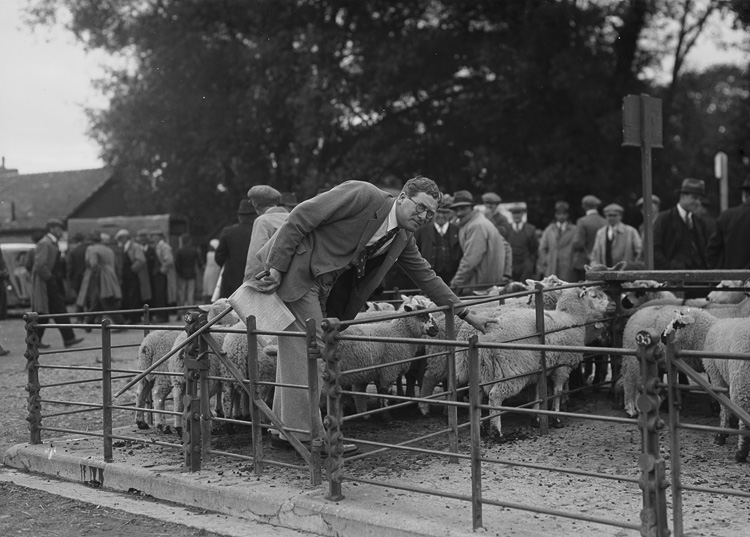 [By-election candidate at a sheep market, 1939]