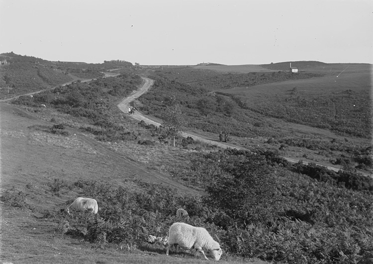 [A view of sheep grazing on the moors, Llandrindod]