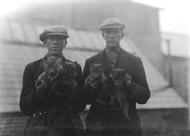 [Men holding fox cubs]