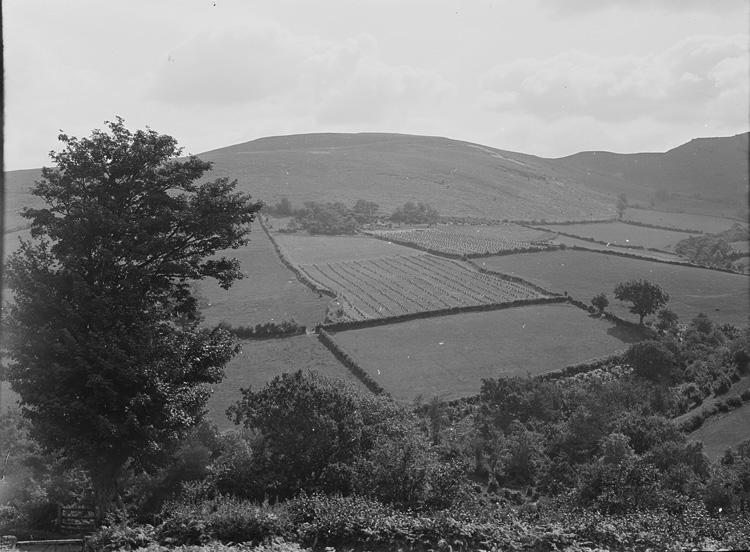 [Farmland]