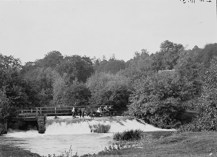 [Cattle standing on a weir]