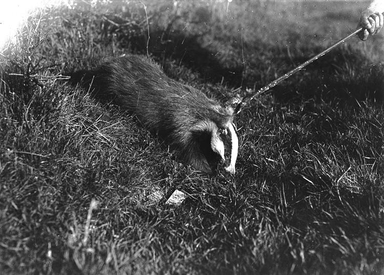 [Badger]