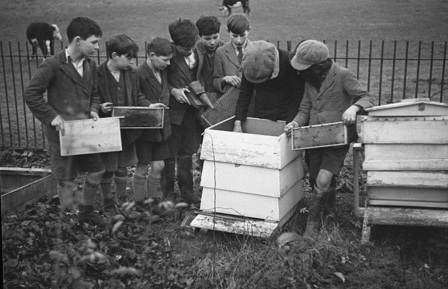 [Aberhafesp schoolchildren engaged in bee-keeping, craftwork and gardening]