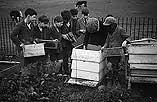 [Aberhafesp schoolchildren engaged in bee-keeping, craftwork and gardening]