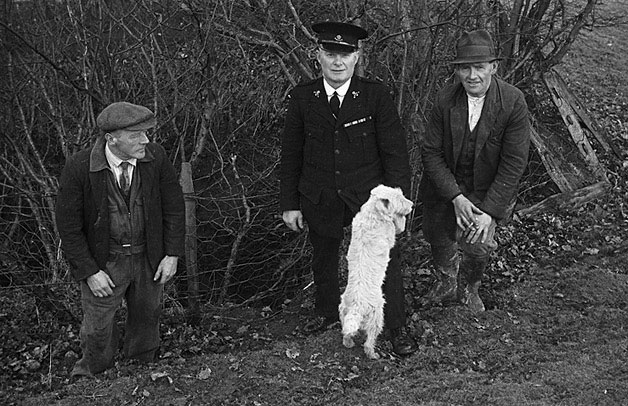[The dog rescued from Melinygloch mine at Bwlch-y-ffridd, Newtown by Inspector T.E. Rees RSPCA]
