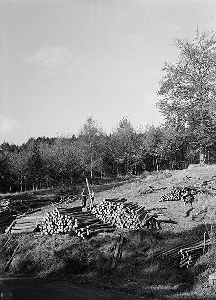 [Doldowlod Wood]