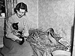 [Anne Adams, Newtown, with a sick swan]