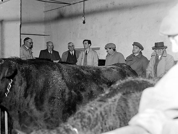 [Merioneth Agriculture Committee demonstration on Llannerch Eryr farm, Bala]