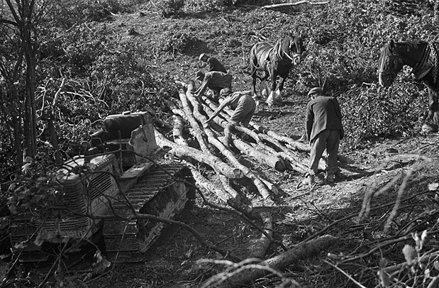 [Women's Land Army girls moving cut timber at Gunley Hall, Welshpool]