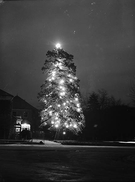 [Llandrindod Wells Christmas tree]