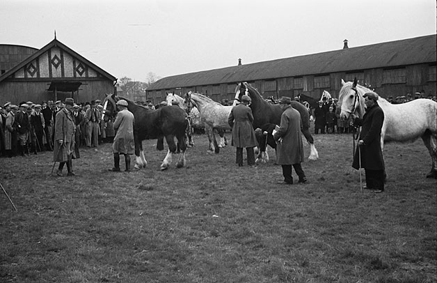 [Horse show and sale at Newtown Smithfield]
