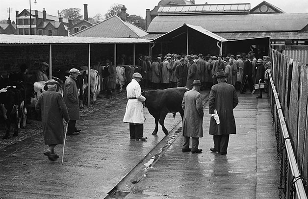 [A new attested (TB) cattle auction premises opened at Oswestry, 1948]