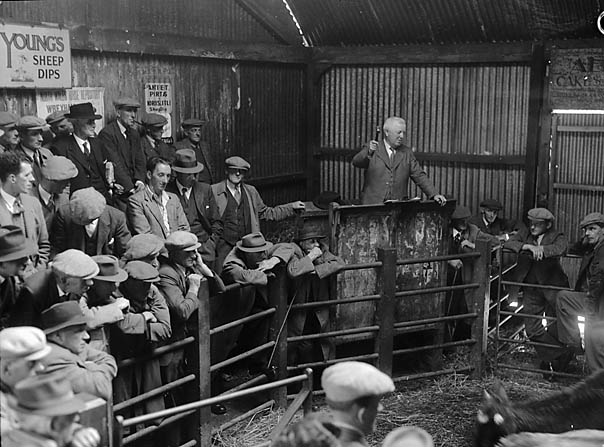 [Sheep sale at Bala]