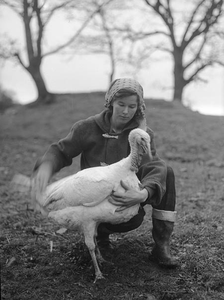 [Miss A Councell with her turkeys on her mountain farm near Rhydymain]