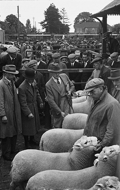 [Kerry Hill Sheep Flock Book Society ram show and sale at Welshpool's Smithfield]