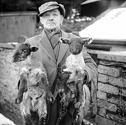 [Man with New Year twin lambs]