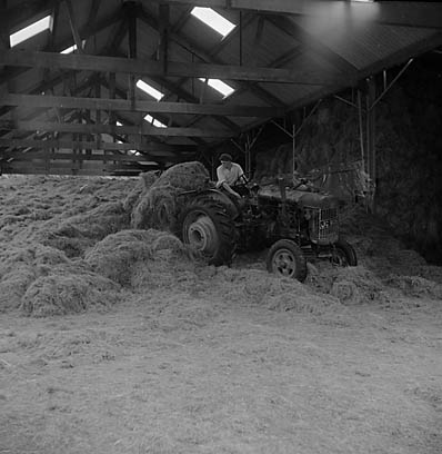 [Making silage on a farm]