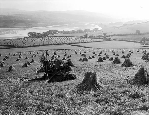 [Old-fashioned harvest scene in the Conwy Valley]