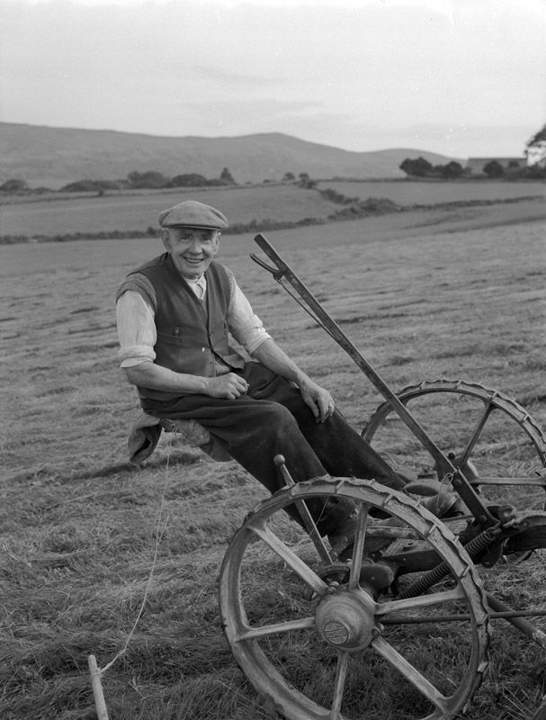 [An old-fashioned way of cutting hay]