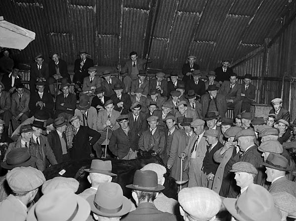 [Dolgellau Smithfield - the cattle market]