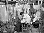 [Welsh Plant Breeding Station]