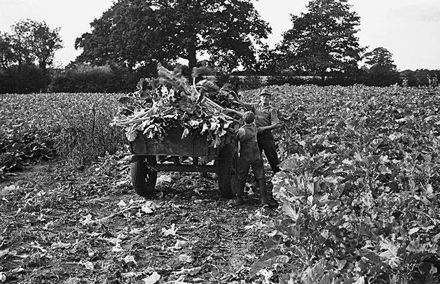 [Scenes at Whitchurch market and views of a kale crop, Shropshire]