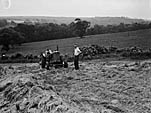 [Gower potato farm]