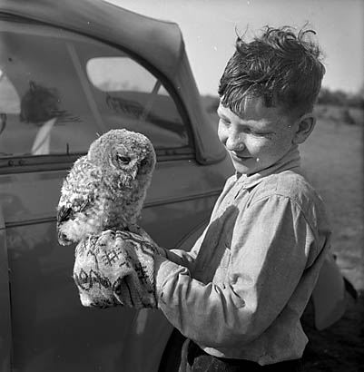 [Baby owl at Oswestry Racecourse]