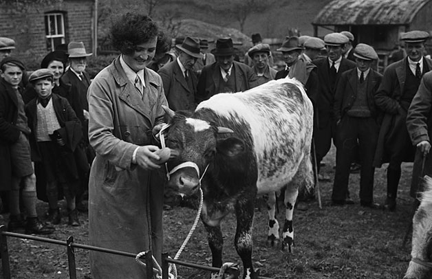 [Prize-winners at Llanfair Caereinion YFC sale and show of dairy heifers]