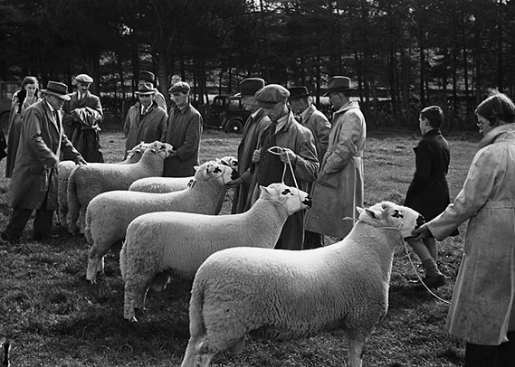 [The Annual Kerry Hill Sheep Society show and sale, at Kerry, Newtown, 1948]
