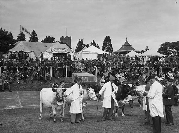 [Carmarthen Show 1951]