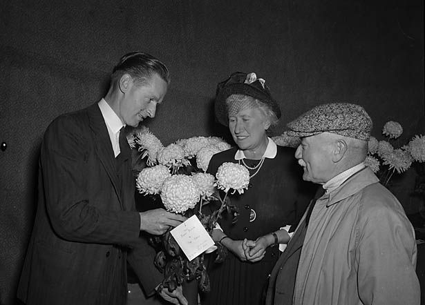[Shrewsbury Chrysanthemum and Gardeners' Association September show, 1950]