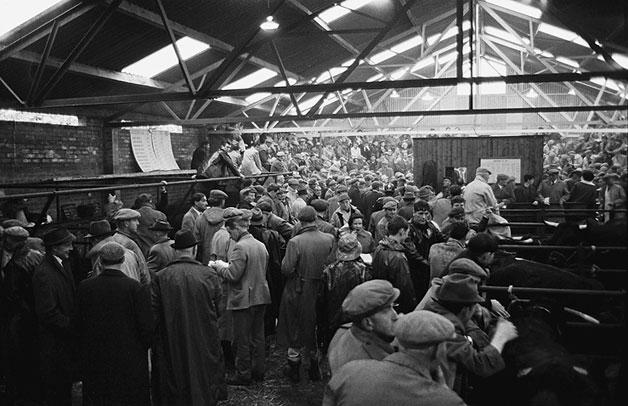 Busy cattle market