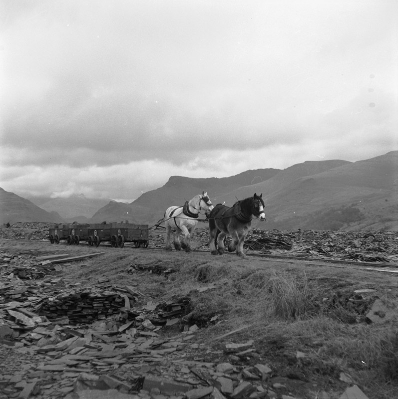 [The horse drawn railway at Dyffryn Nantlle before its closure in 1959]