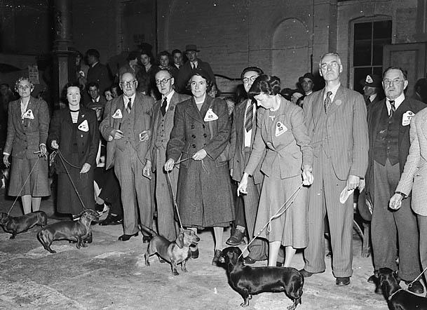 [Shrewsbury Dog Show]