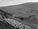 """[A """"Farmers Weekly"""" feature on the Rheidol hydro-electric scheme]"""