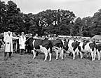 [Montgomeryshire County Show]