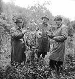 [Montgomeryshire Forest Journey]