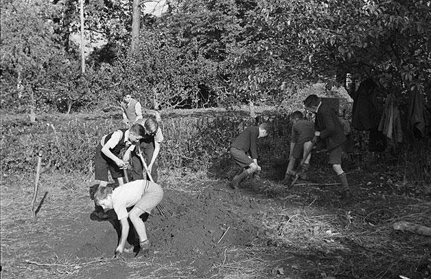 [Pupils of Albert Road School, Oswestry, gardening]