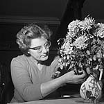 [The Caernarfonshire Federation of Women's Institutes flower arranging competition]